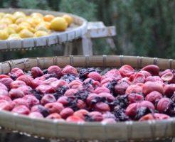 梅酢の効果効能で若返る7のアンチエイジング法